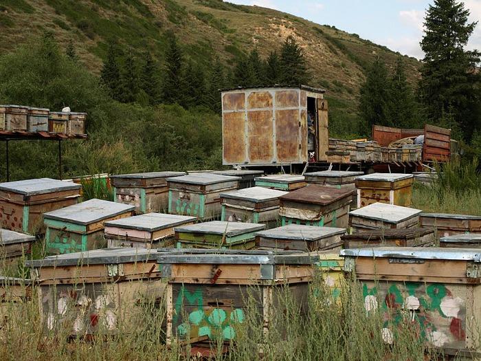 Киргизия-Фотозарисовки. 50120