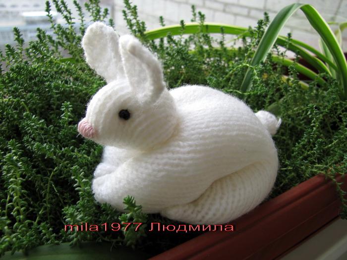 2011 годом кота (кролика)
