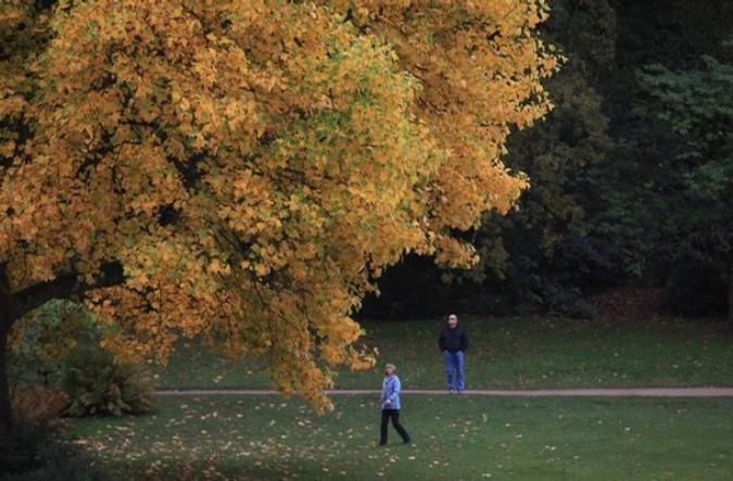 Осенние цвета в Сторхед Национальном фонде возле Уорминстер, Англия, 3 ноября 2010 года.