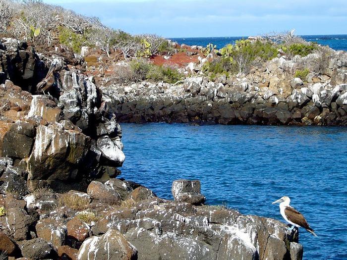 Галапагосские острова 91399