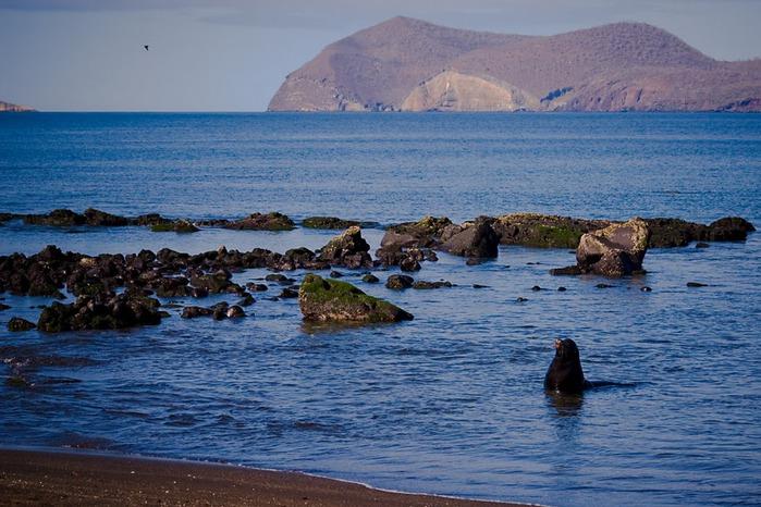 Галапагосские острова 59795
