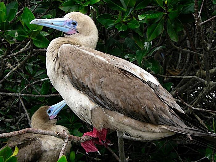 Галапагосские острова 55343