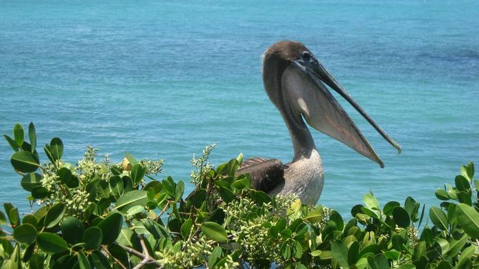 Галапагосские острова 85240
