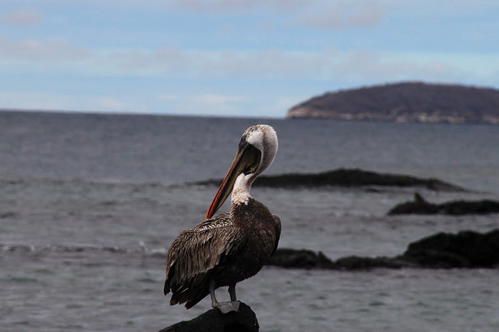 Галапагосские острова 24907