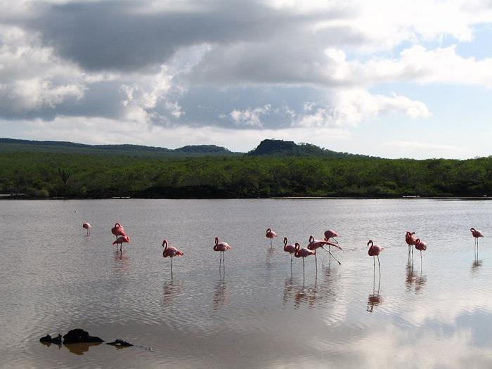 Галапагосские острова 80616