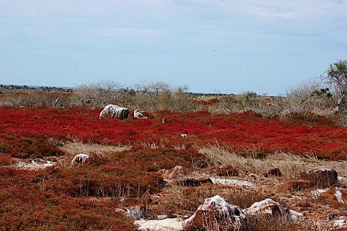 Галапагосские острова 93484