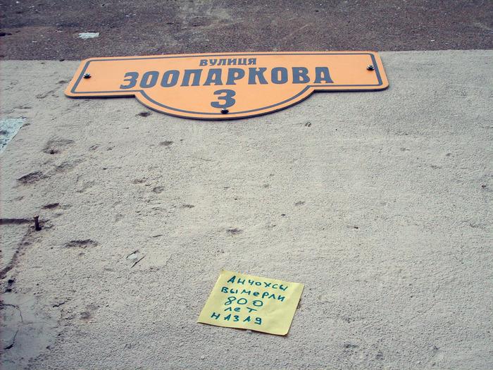 монолог с городом, бумажки с надписями, анчоусы вымерли, зоопарковая улица