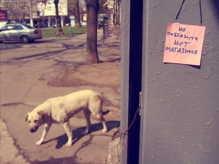 монолог с городом, бумажки с надписями, поблизости. собака страшни
