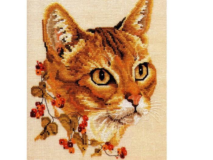 Рыжий Кот. Обсуждение на