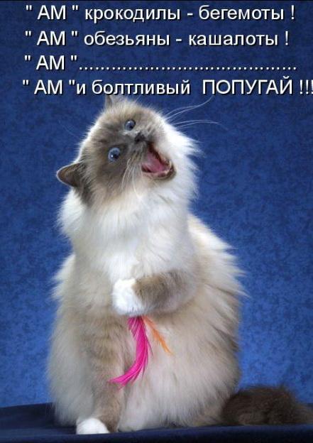 http://img0.liveinternet.ru/images/attach/c/2//66/254/66254985_010.jpg