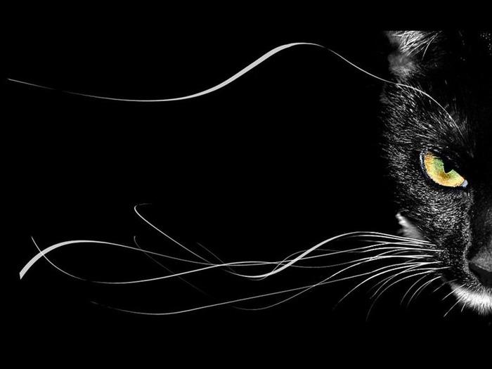 А как вы относитесь к чёрным кошкам 5