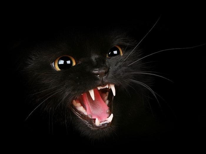 А как вы относитесь к чёрным кошкам 1