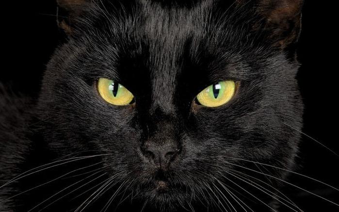 А как вы относитесь к чёрным кошкам 3