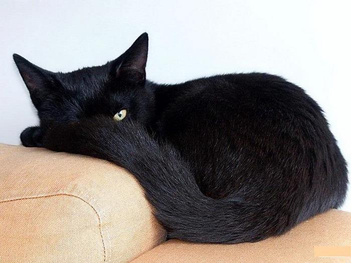 А как вы относитесь к чёрным кошкам 7
