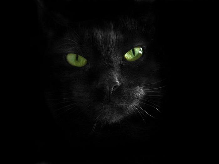 А как вы относитесь к чёрным кошкам 9