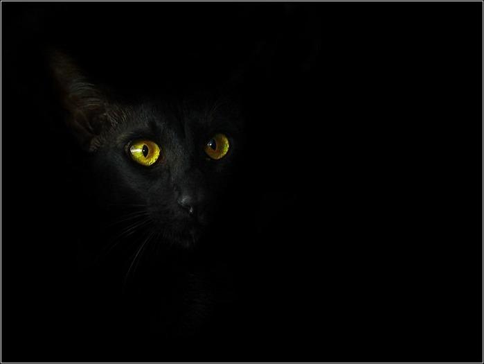 А как вы относитесь к чёрным кошкам 11