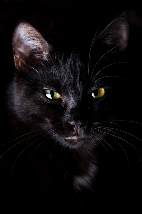 А как вы относитесь к чёрным кошкам 12