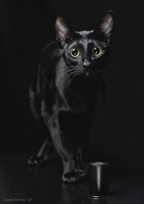 А как вы относитесь к чёрным кошкам 14