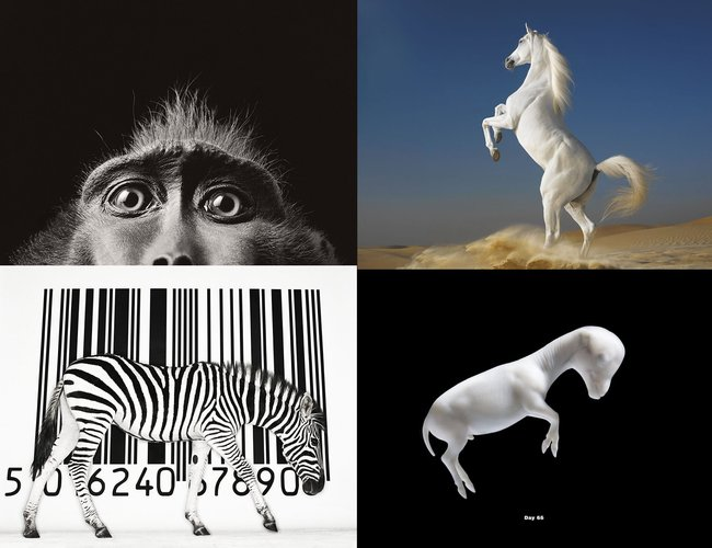 Портреты животных от Tim Flach 19