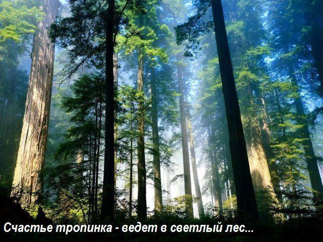 img_2765517_617_6 (640x480, 95 Kb)