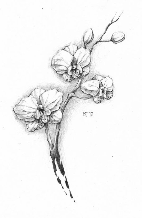 Рисунок орхидеи карандашом