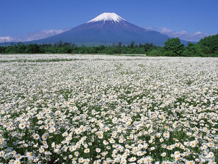 Величественный символ Японии - гора Фудзи 50