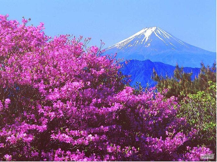 Величественный символ Японии - гора Фудзи 64