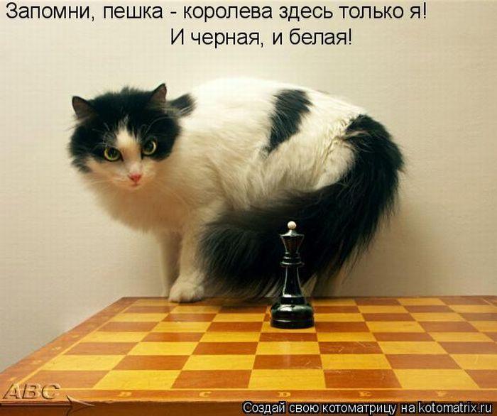 http://img0.liveinternet.ru/images/attach/c/2//66/766/66766040_184.jpg