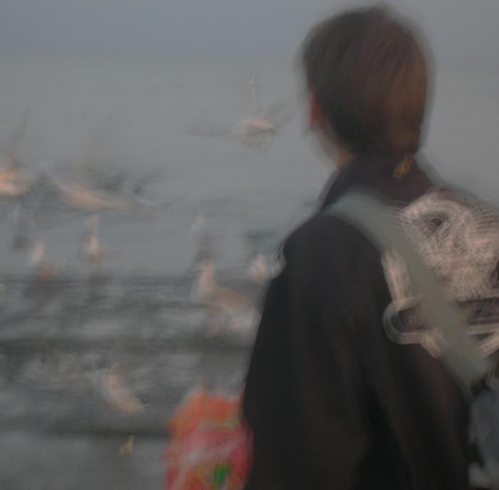 чайки море кормить золото закат