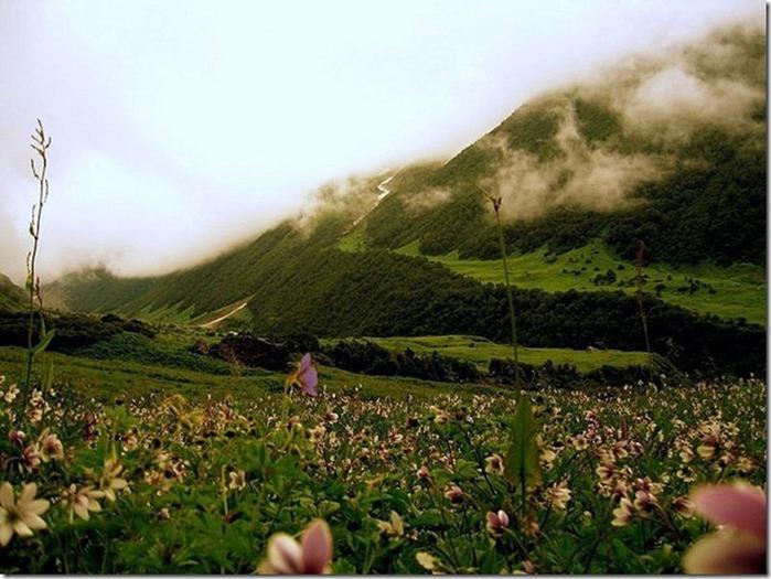 Долина цветов – жемчужина Гималаев 2