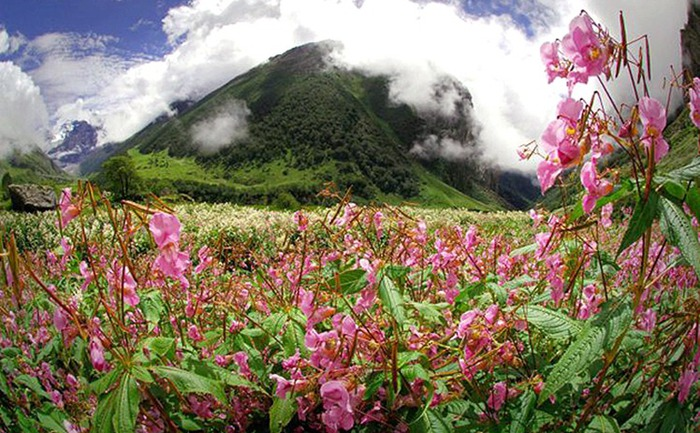 Долина цветов – жемчужина Гималаев 4
