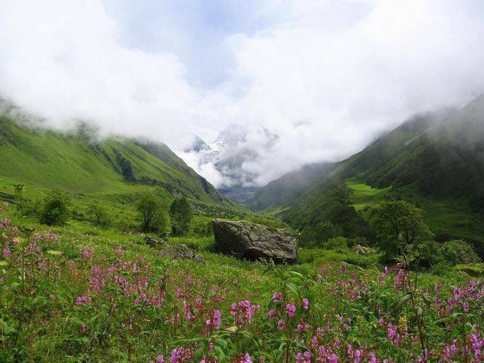 Долина цветов – жемчужина Гималаев 7