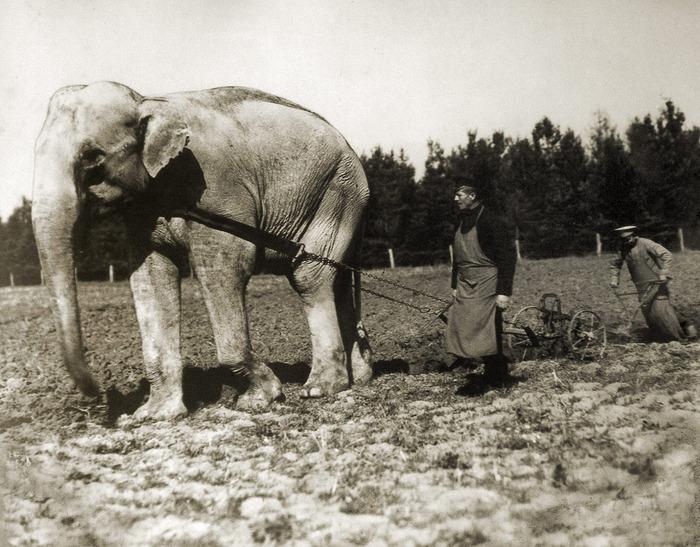 слон из болгарского зоопарка