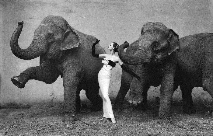 слоны и девушка - танцуют все!