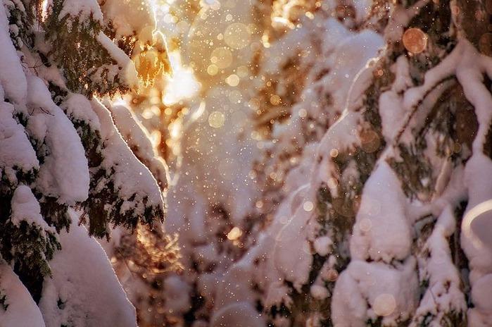 Вот и наступила зима 12