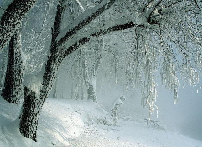 Вот и наступила зима 17