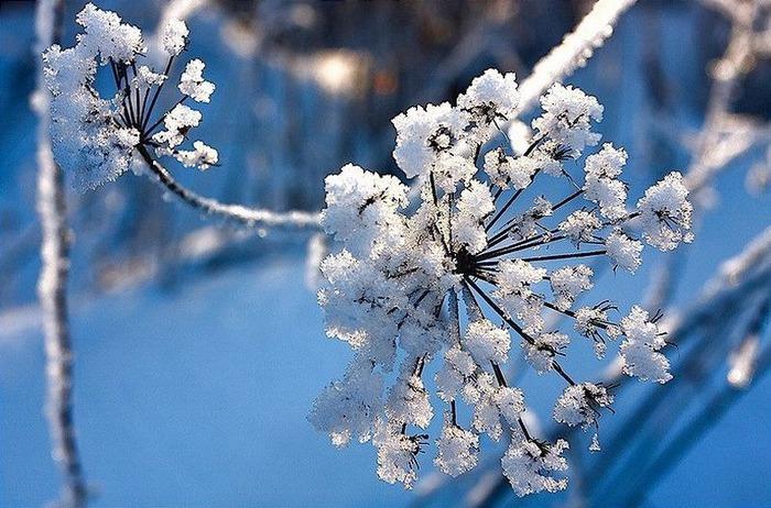 Вот и наступила зима 23