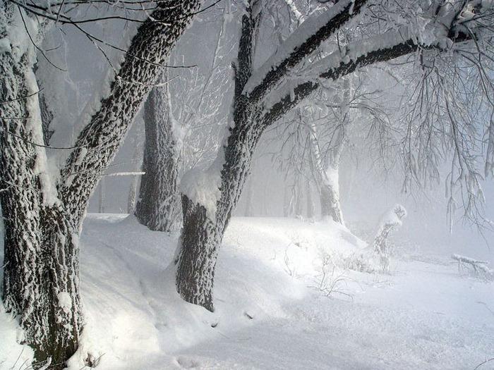 Вот и наступила зима 30