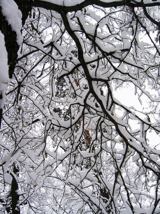 Вот и наступила зима 32