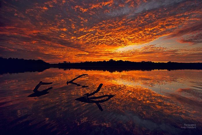 Профессиональные фотографии природы от Энди Мамфорда (Andy Mumford)