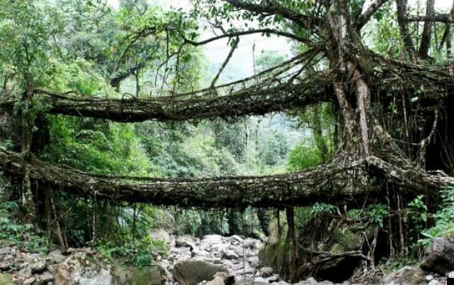 Живые мосты в Индии. Виртуальное путешествие