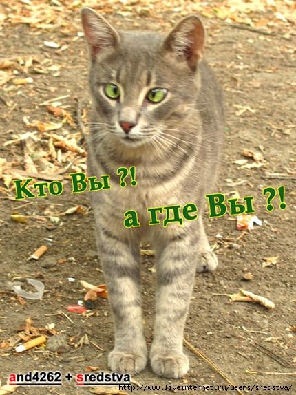 кот, кошки, смешные кошки, смешные коты, котоматрица, кто вы, а где вы, приколы с кошками, веселый кот, косой кот, косые взгляды, кошачий доктор, зоогурман, зооврач