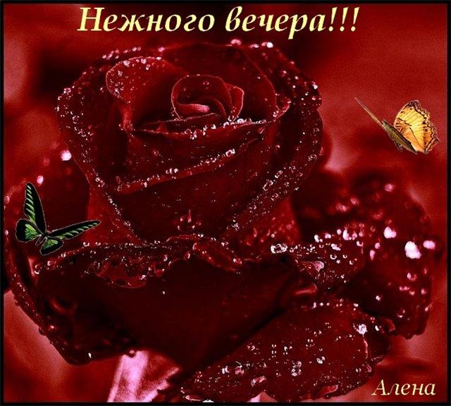 добрый вечер милая картинки