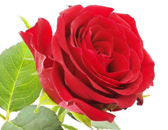 красивый цветок картинки: