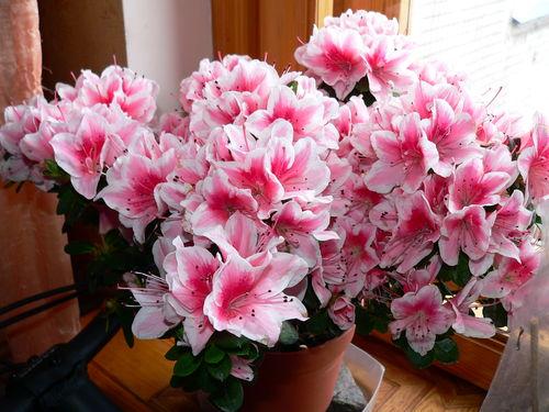 http://img0.liveinternet.ru/images/attach/c/2//67/432/67432337_WItZmQ4Zi.jpg