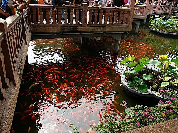 «Сад Радости Yuyuan. Юй Юань» (Yuyuan Shangchang) 54339