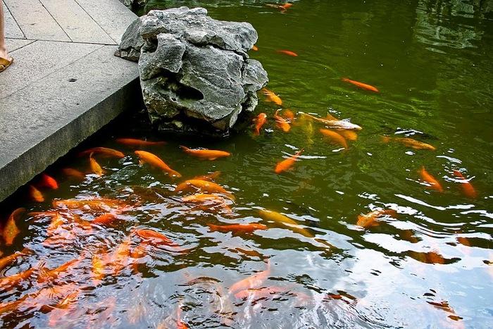 «Сад Радости Yuyuan. Юй Юань» (Yuyuan Shangchang) 55608