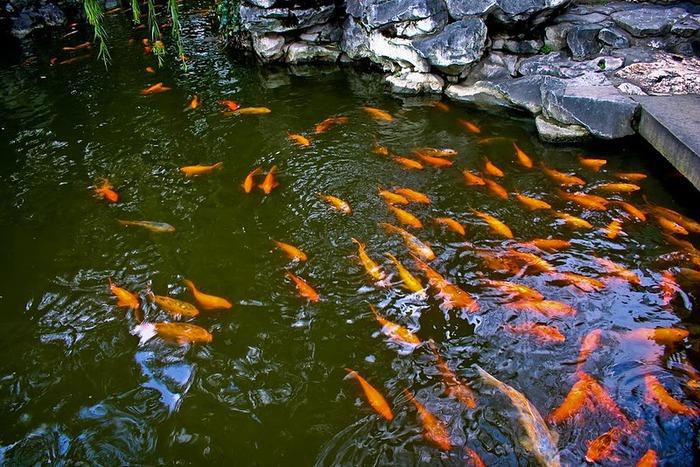 «Сад Радости Yuyuan. Юй Юань» (Yuyuan Shangchang) 29579
