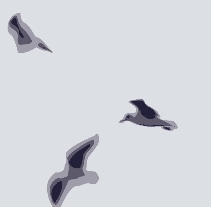 чайки векторные