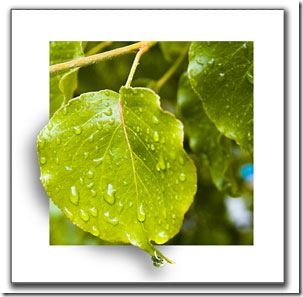 http://img0.liveinternet.ru/images/attach/c/2//67/467/67467940_clip_image001_thumb.jpg